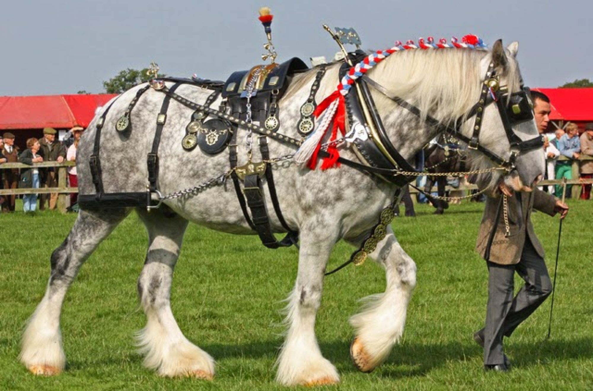 Cornish Heavy Horse Society