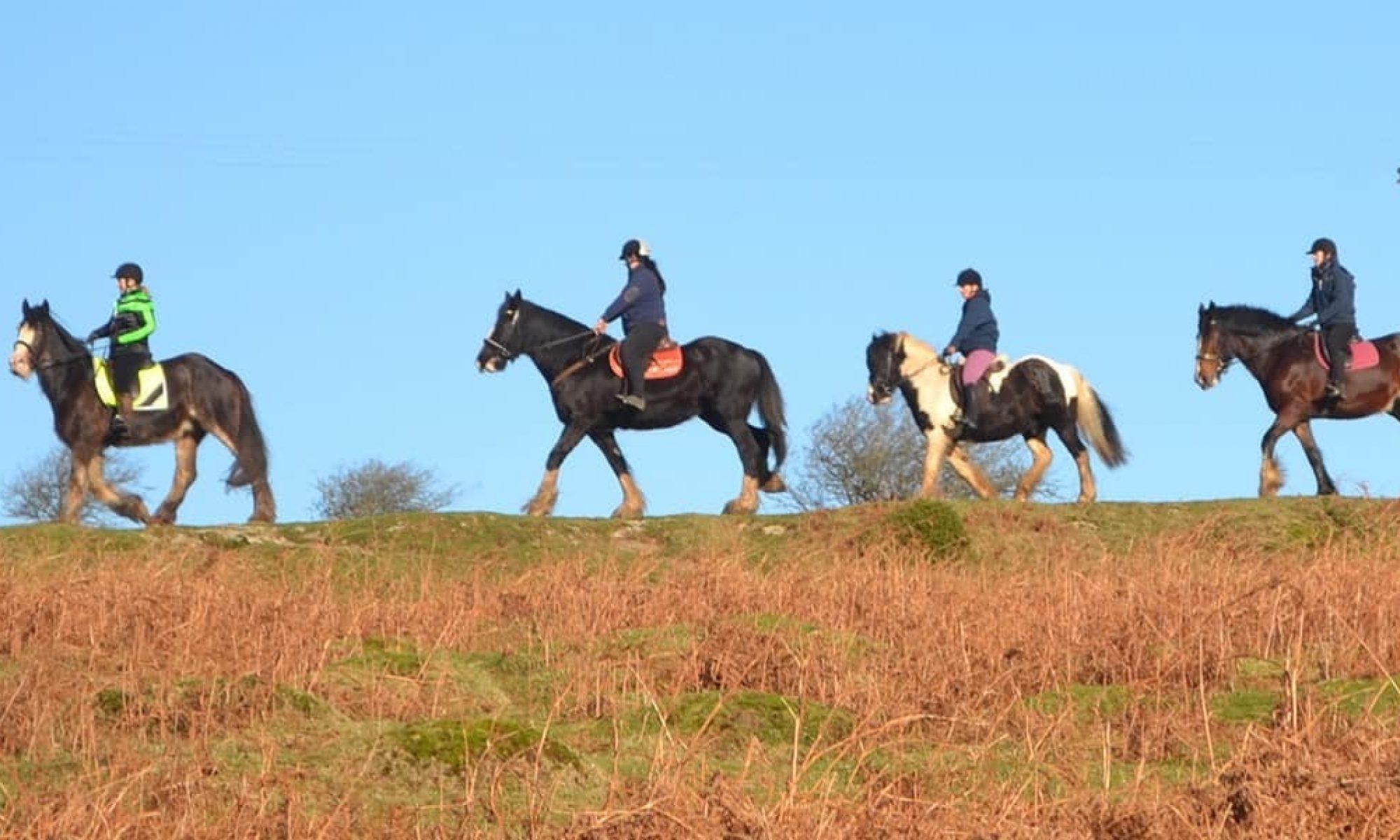 Cornish Heavy Horse Society